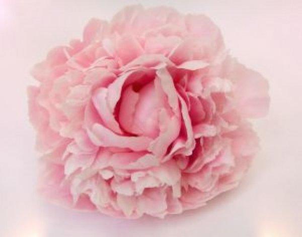 pink-peony_2807197.jpg